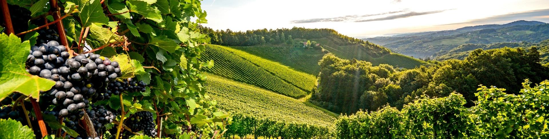 Bourgogne_G