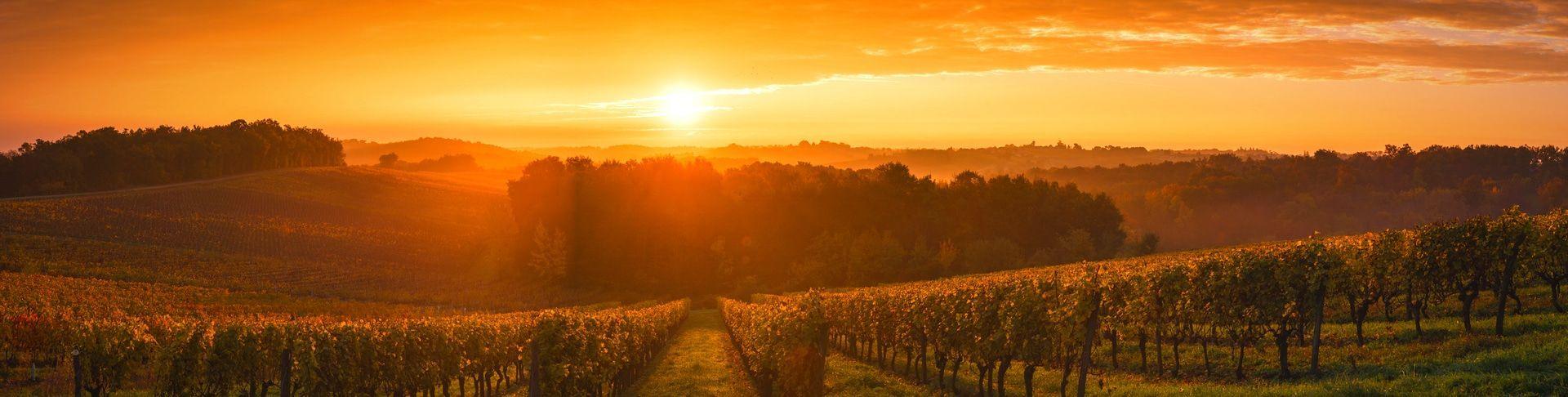 Vins De France | Commandez En Ligne | Fabrication Artisanale