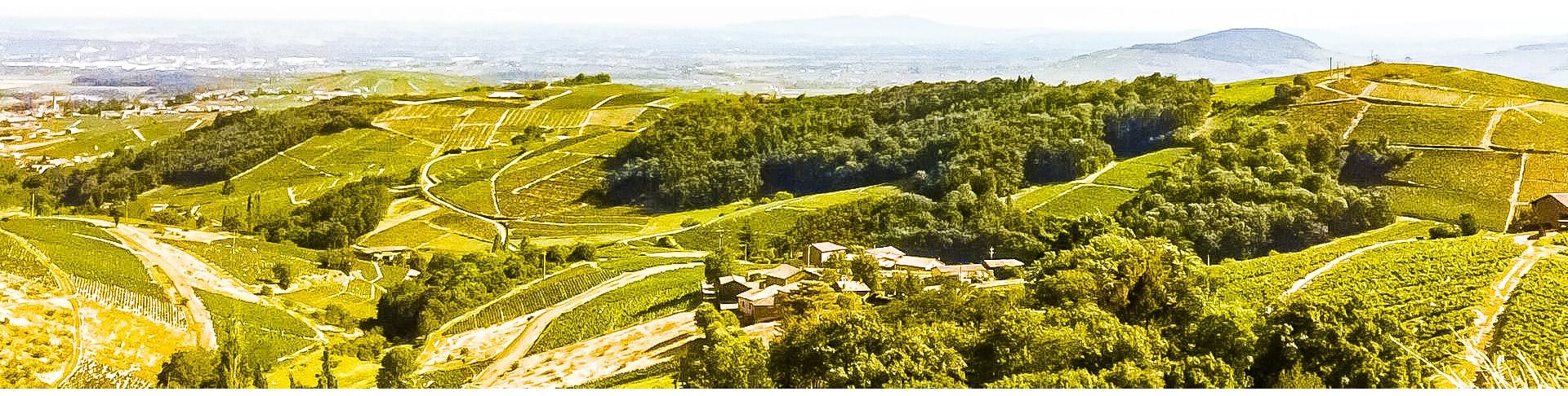 Beaujolais   Achat Groupé de vins