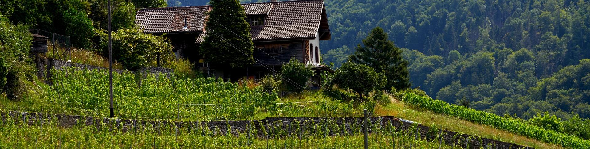 Savoie & Jura | Achat de vins groupé