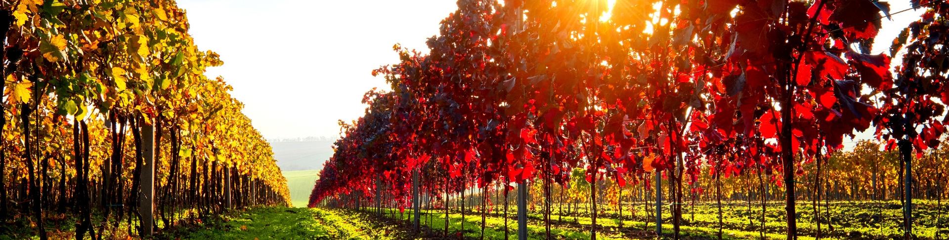 Alsace | Achat de vins groupé