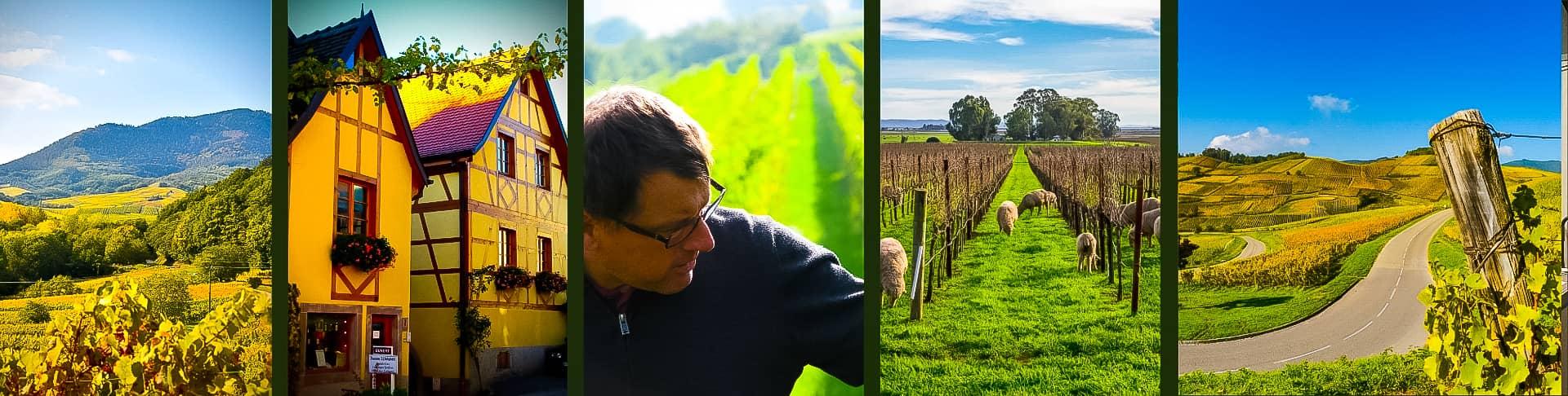 Domaine J.L. Schwartz | Vins D'Alsace