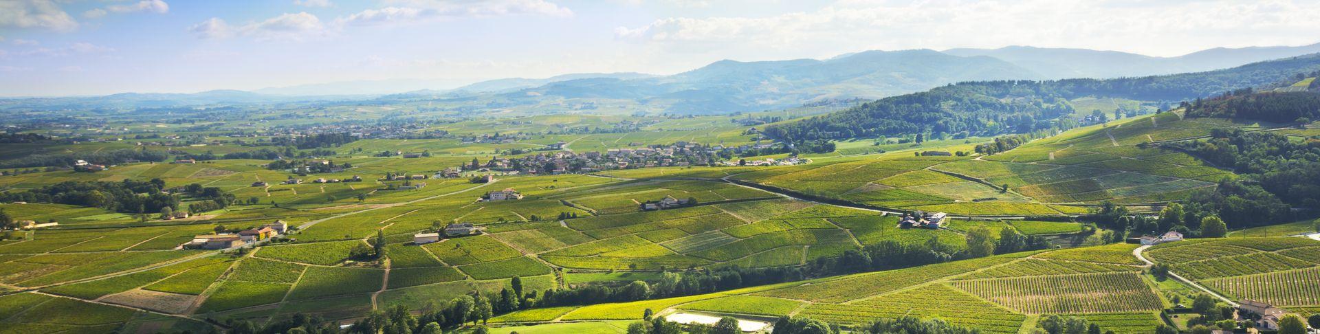 Vins Du Beaujolais | Commandez En Ligne