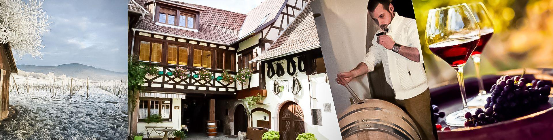Domaine Vieux Pressoir-Schlosser | Vente en Ligne | Vins & Crémants